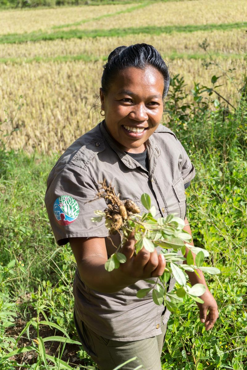 Notre guide du Saha Forest Camp qui nous montre la récolte de la plante d'arachides