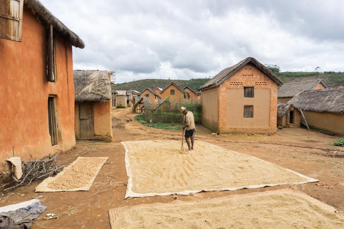 Villageois en train d'étendre et faire sécher le riz à Anjozorobe