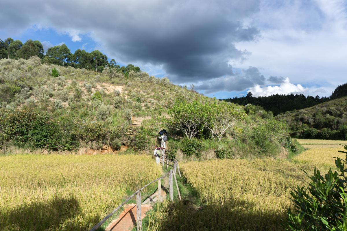 Vue sur les rizières à l'arrivée au Saha Forest Camp de Madagascar