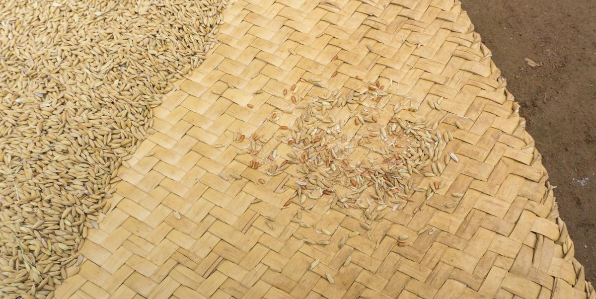Tapis avec riz rouge qui sèche au soleil à Madagascar