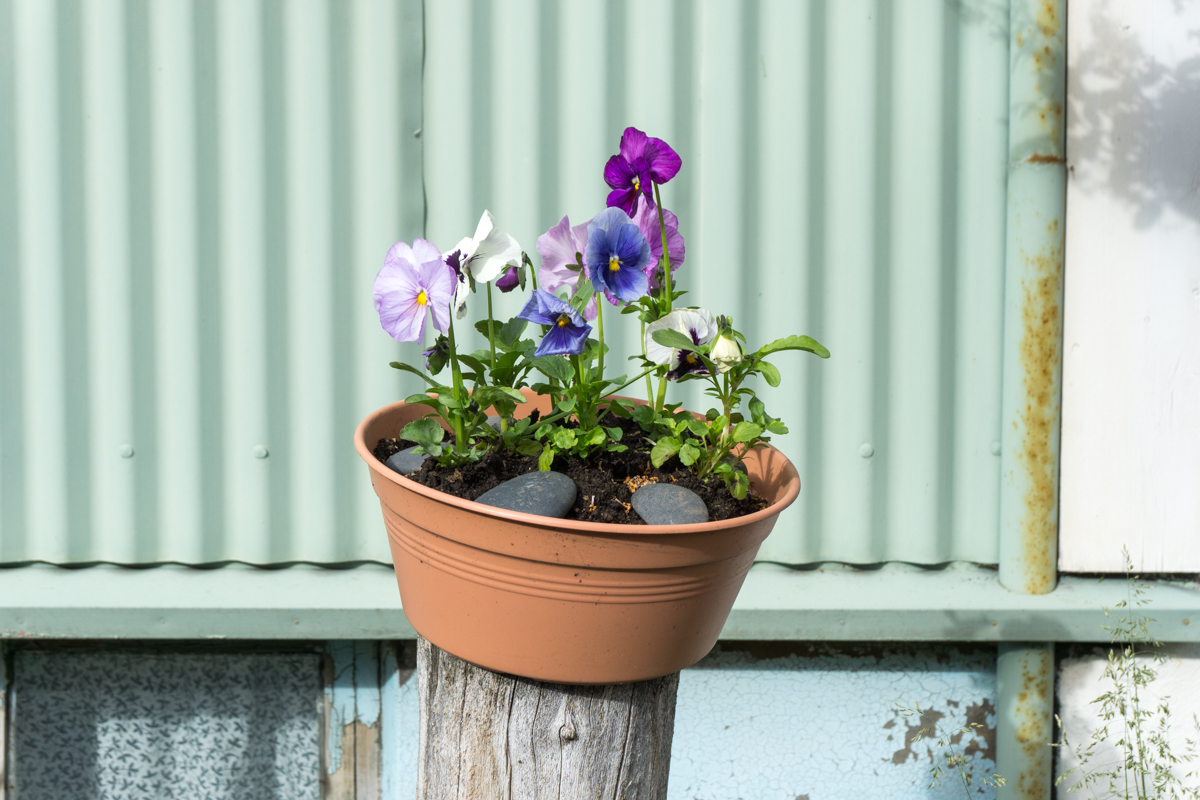 Pot de fleur dans les rues de Reykjavik