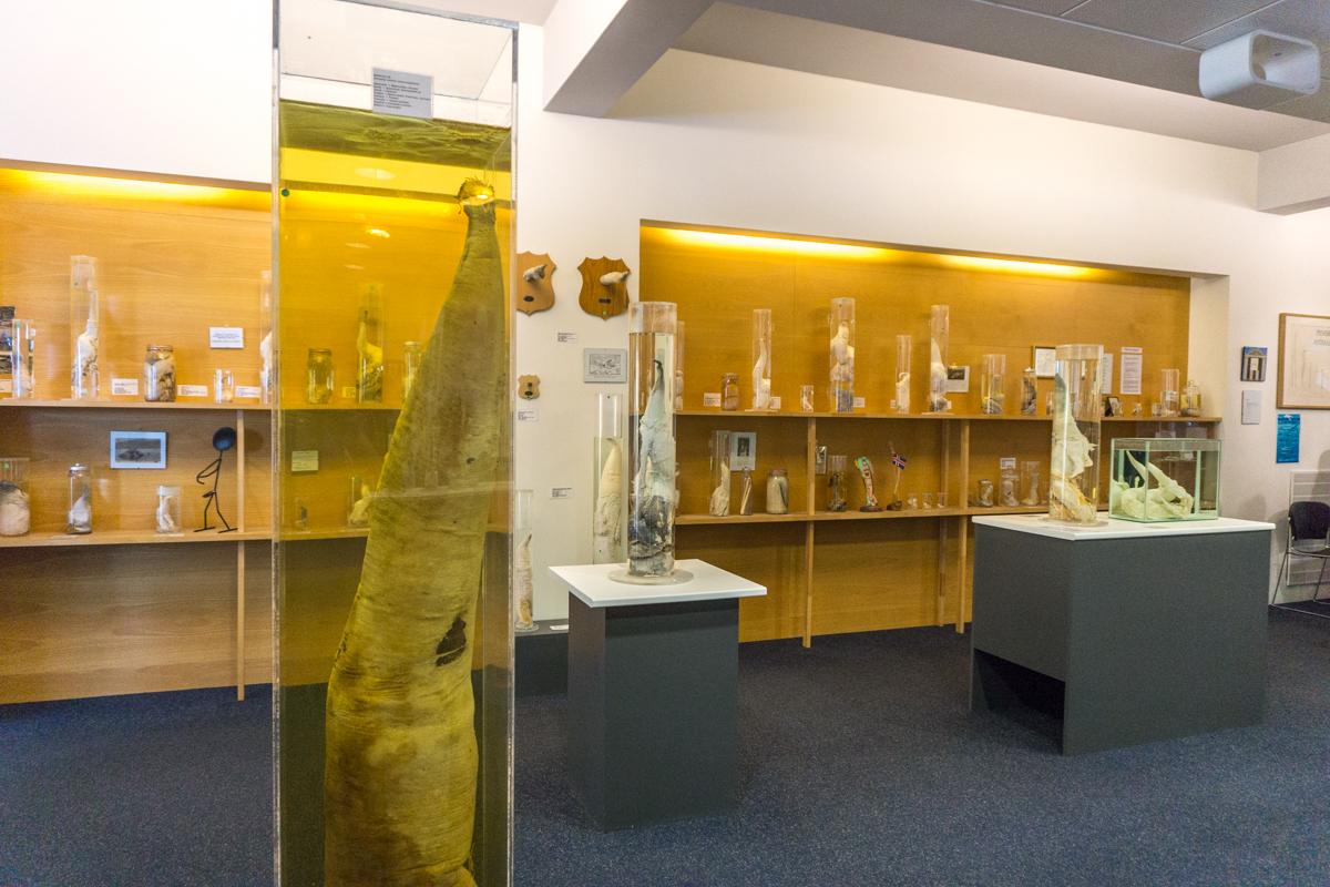 Musée du pénis de Reykjavik