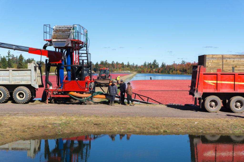 Camions de récolte de la canneberge au centre d'interprétation du Québec - Canada