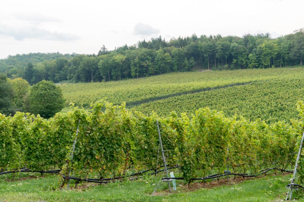Vignoble - Panorama typique des cantons de l'est