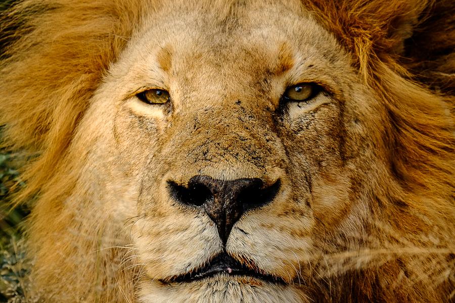Afrique du Sud - Photo par 100 Pied à terre