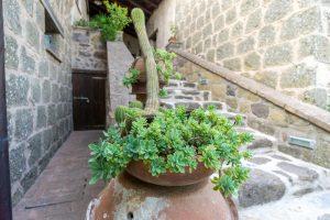 Plantes - Agriturismo biologico Sant'Egle - Où se loger en Toscane
