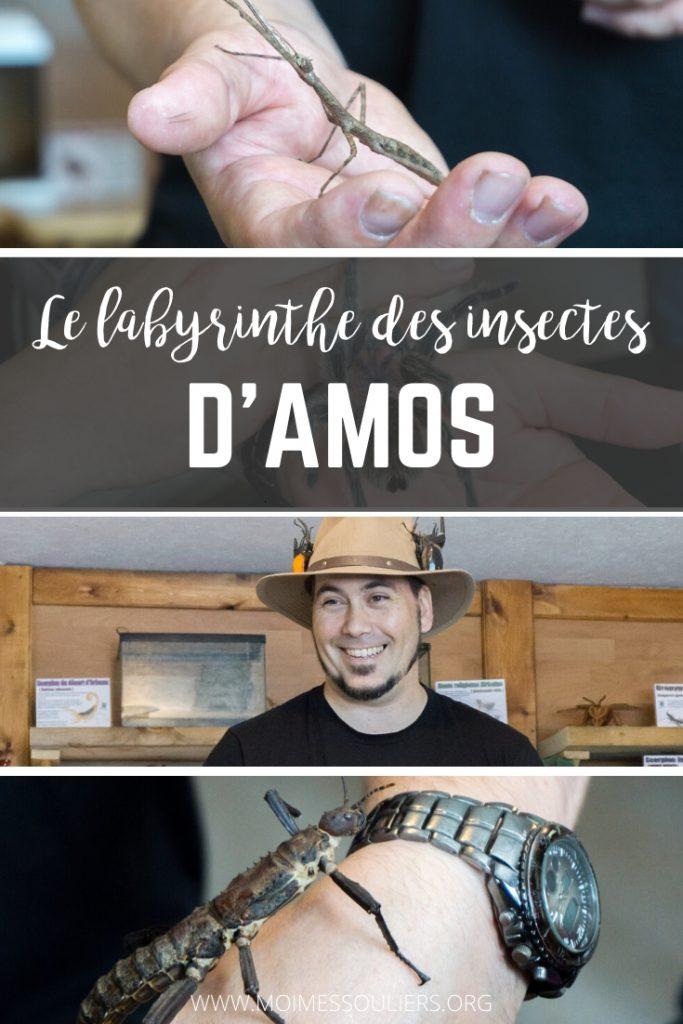 Labyrinthe des insectes d'Amos