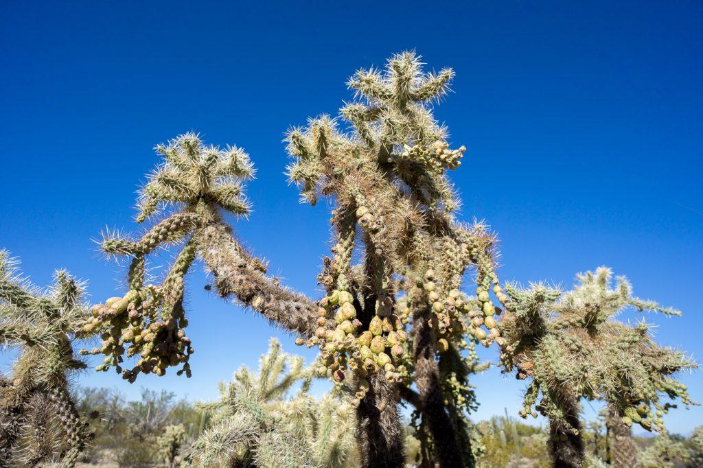 La folie des cactus en Arizona ou quoi faire aux États-Unis