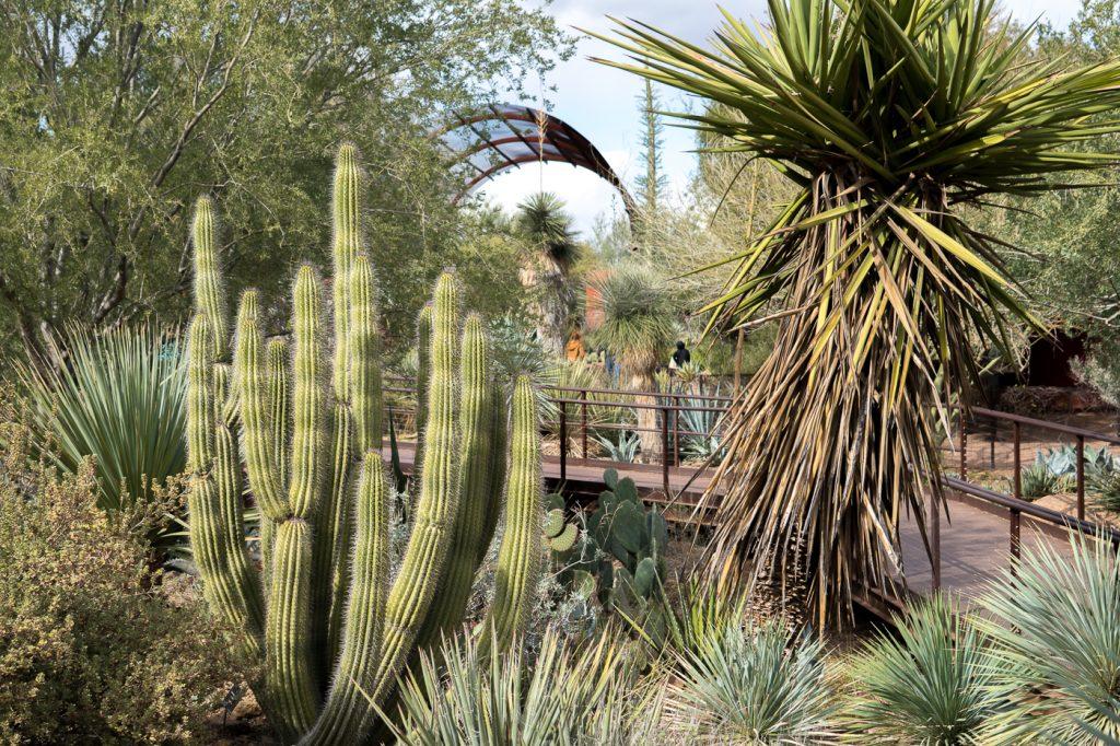 Desert Botanical Garden de Phoenix, Arizona
