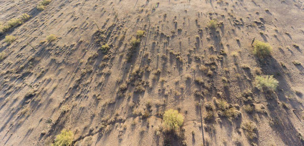 Ombre des cactus du désert de Sonora en Arizona