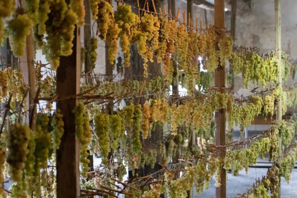Que voir en Toscane - Vinsanto fait avec raisins blancs