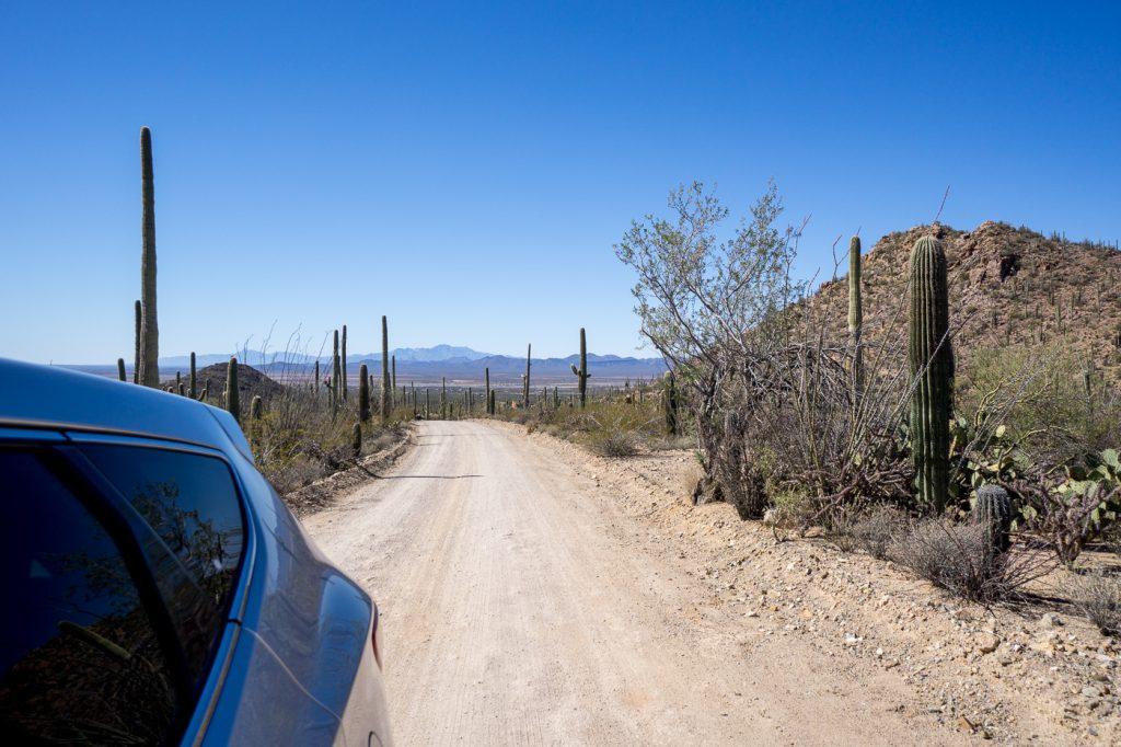 Roadtrip en Arizona - Vue du loop de Saguaro National Park
