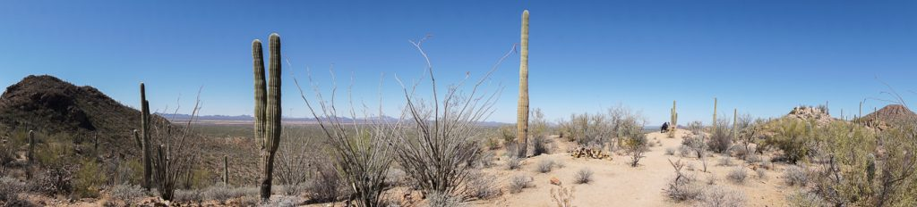 Panorama sur le sentier de marche dans le Saguaro National Park entre Phoenix et Tucson Arizona
