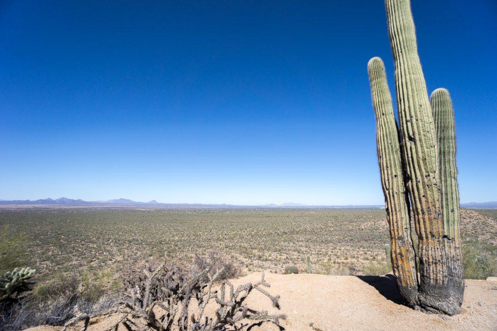 Parc national de Saguaro plein de cactus - Vue de la randonnée - États-Unis