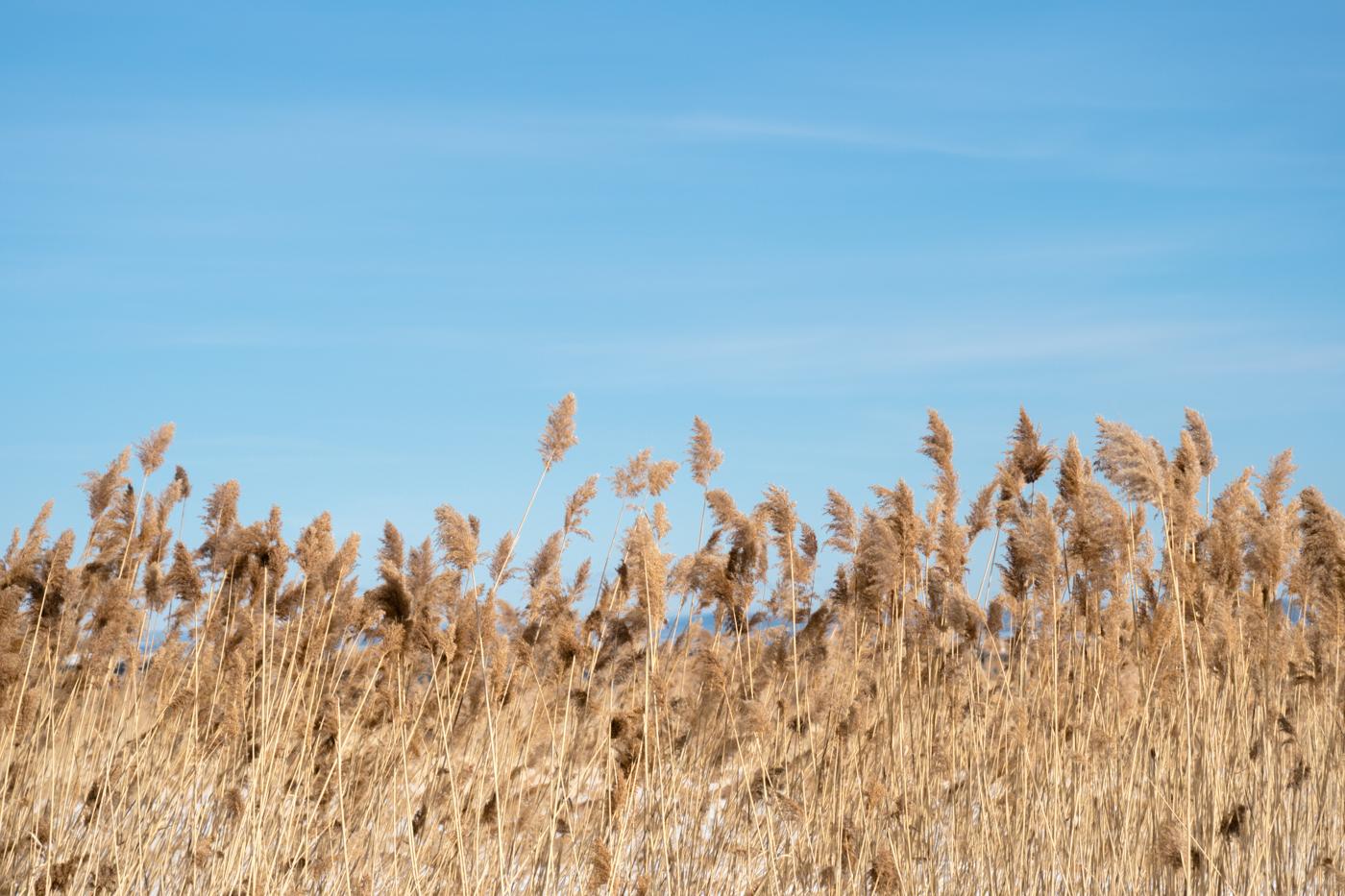 Herbes séchées de l'hiver à Charlevoix