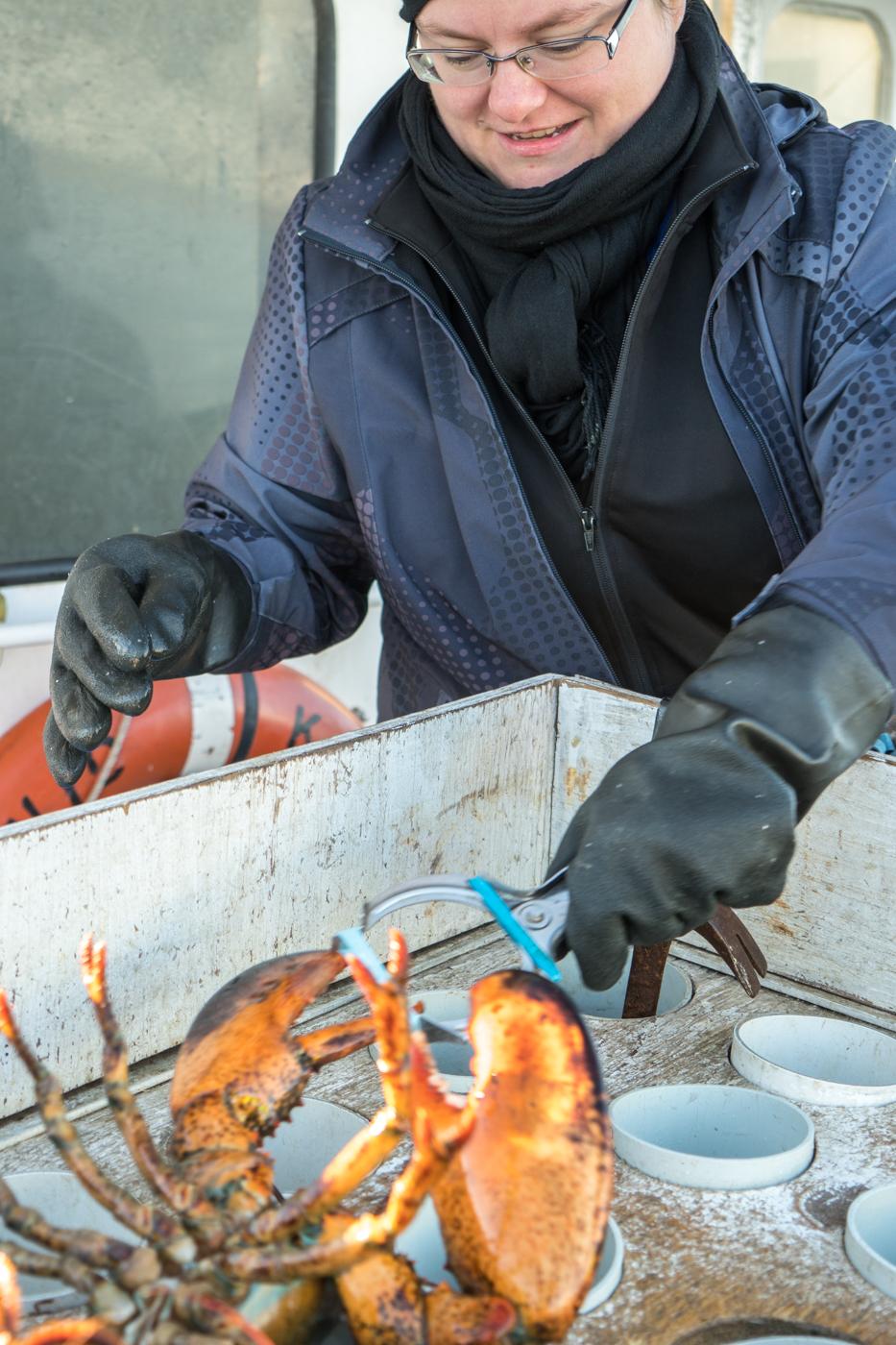 Jennifer élastique le homard des îles de la Madeleine