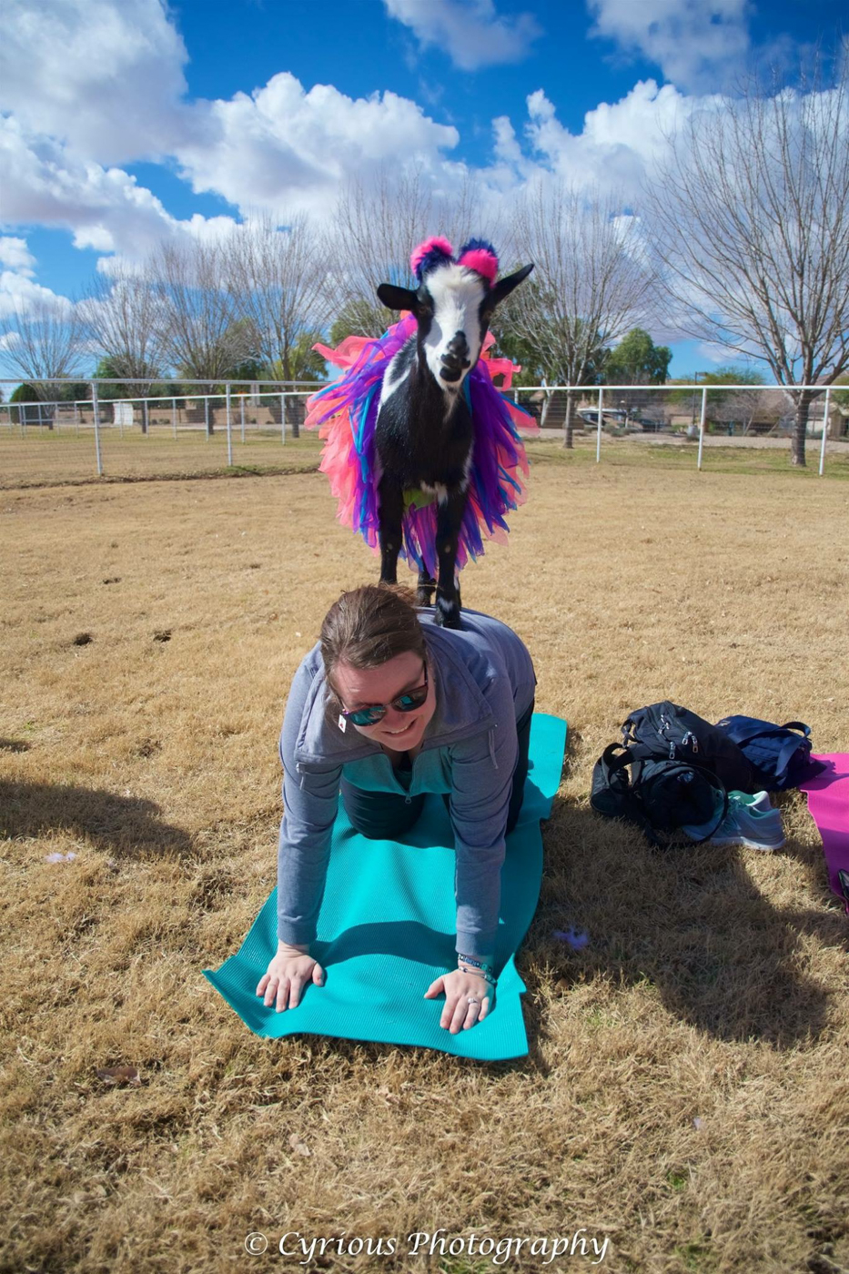 Jennifer avec chèvre au yoga