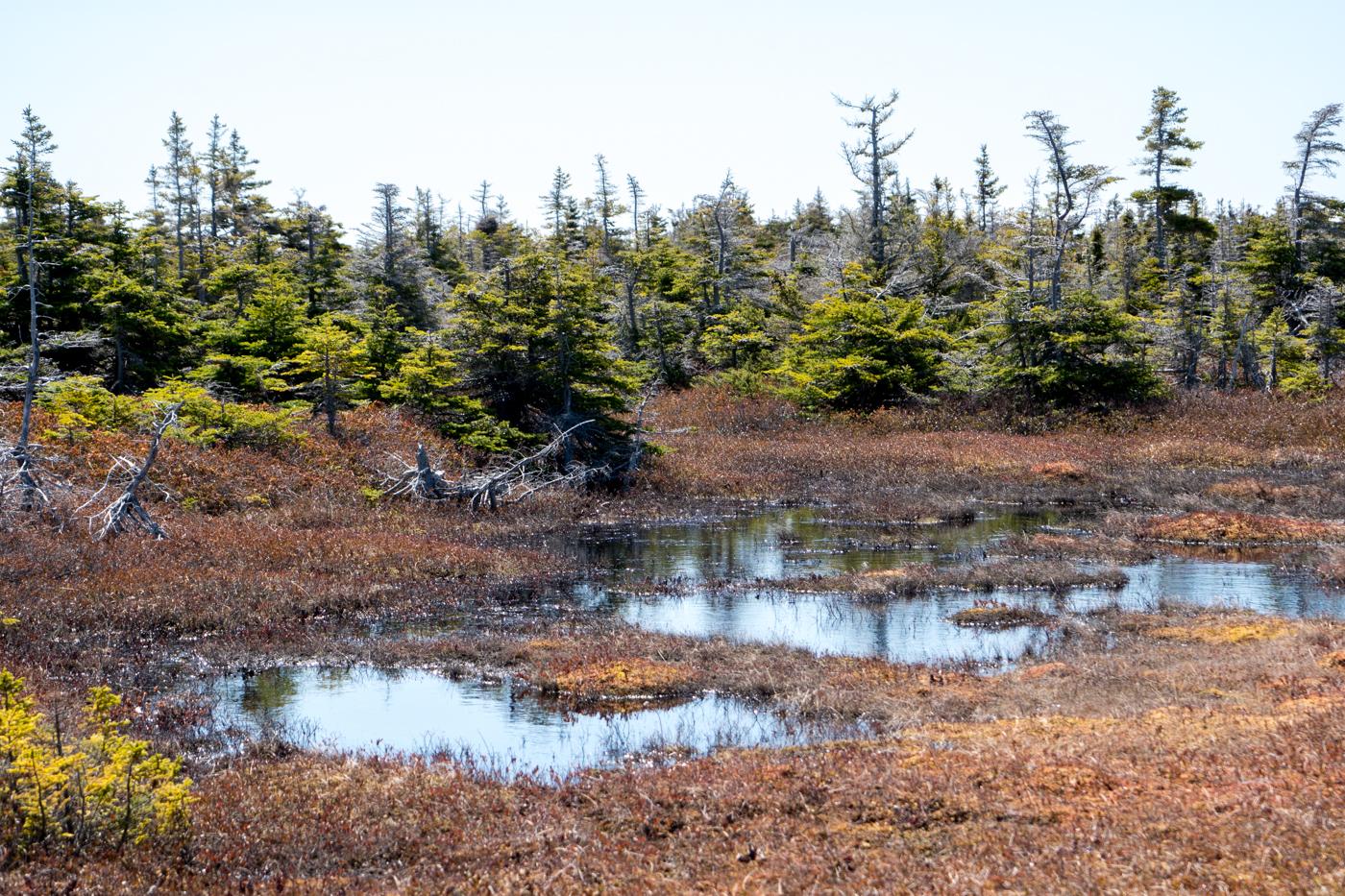 Marais et marécage - Randonnée aux îles de la Madeleine