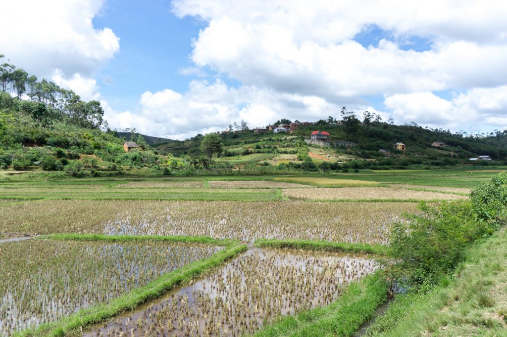 Champ de rizière à Madagascar