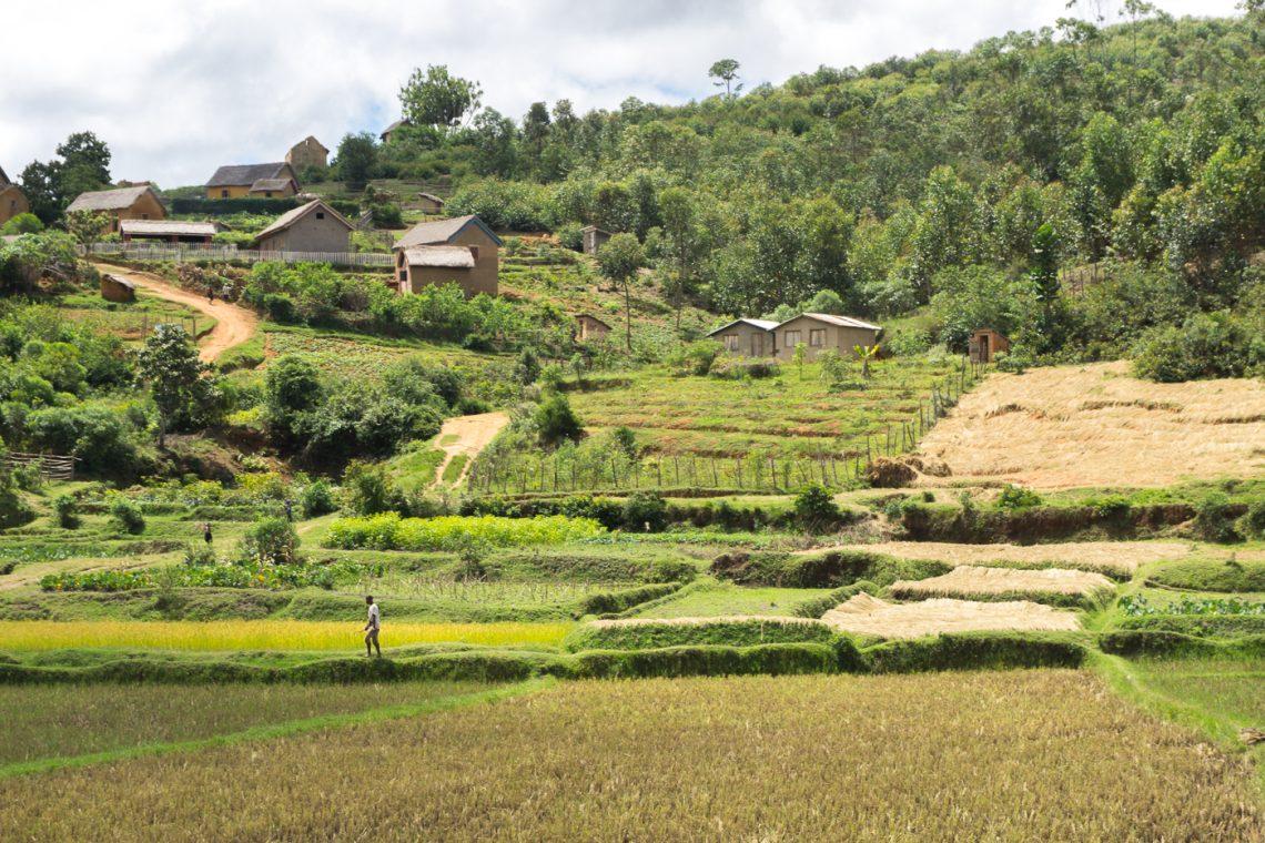Colline et rizière à Madagascar