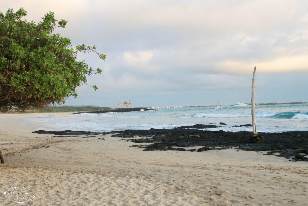 Galapagos, destination idéale en 2019