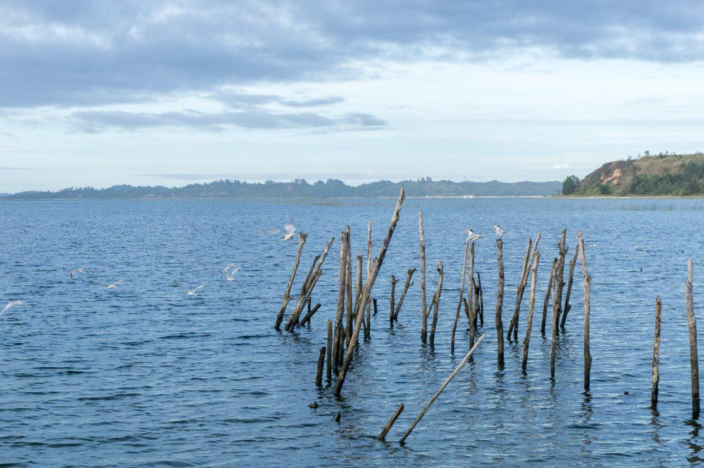 Oiseaux sur filets de pêche locaux - Madagascar