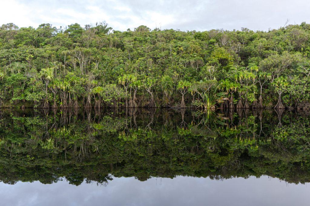 Reflets d'arbres sur l'eau à Madagascar