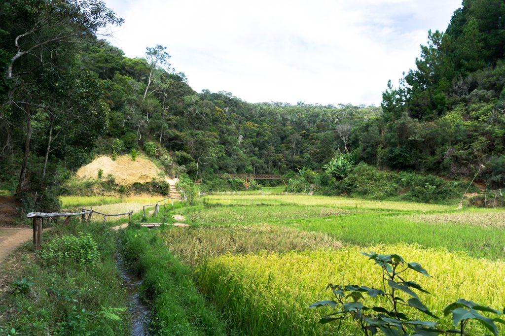Sentier de randonnée vers Saha Forest Camp