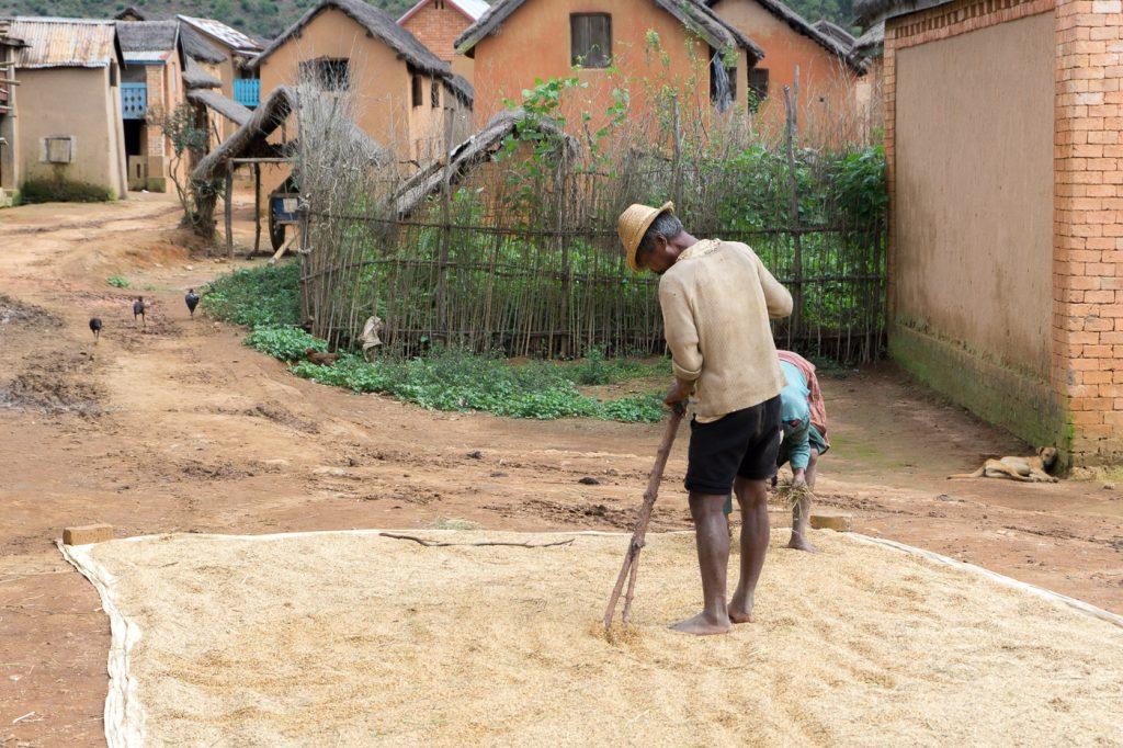 Villageois malgache qui prépare le riz