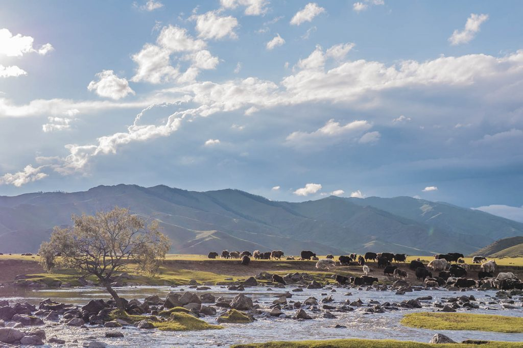Voyage en Mongolie, blogue Bons baissers