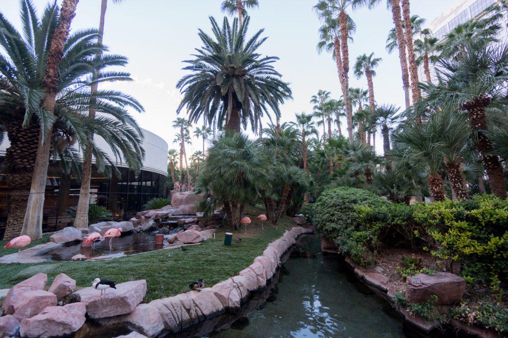 Flamants roses du Flamingo Hotel Las Vegas