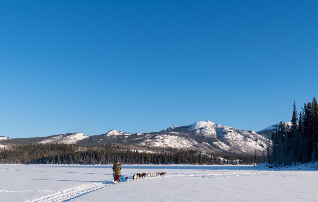 Musher et chiens de traîneau dans les montagnes du Yukon