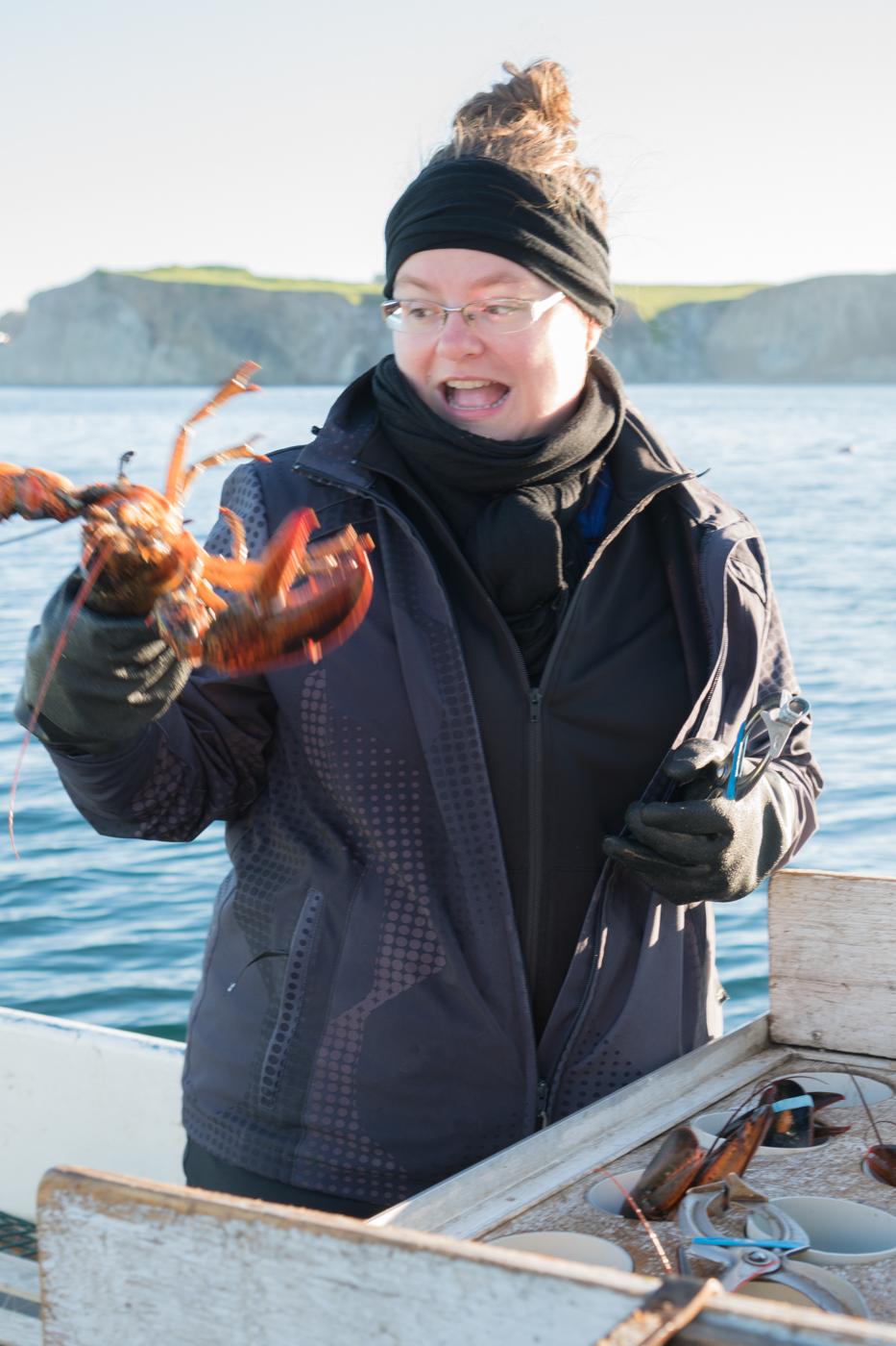 Jennifer pendant l'élastiquage de homards