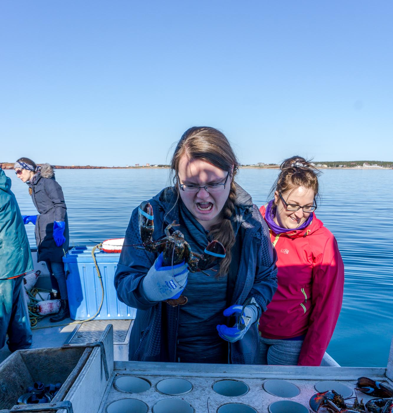 Jennifer essaie d'élastiquer le homard en voyage aux îles de la Madeleine