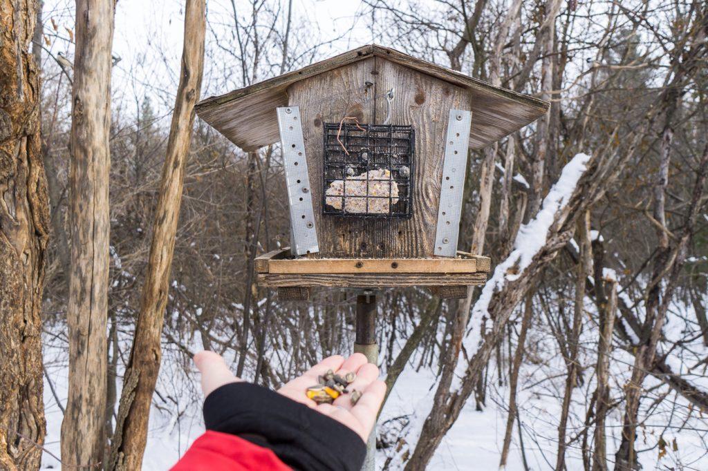 cabane à oiseau au Mer bleue bog d'Ottawa