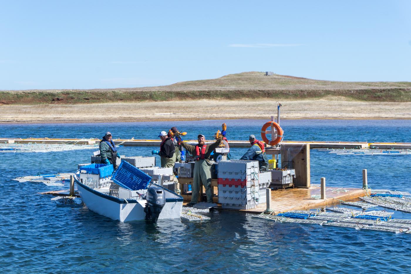 pêcheurs qui trient le homard à Petite-Baie de Havre-aux-Maisons