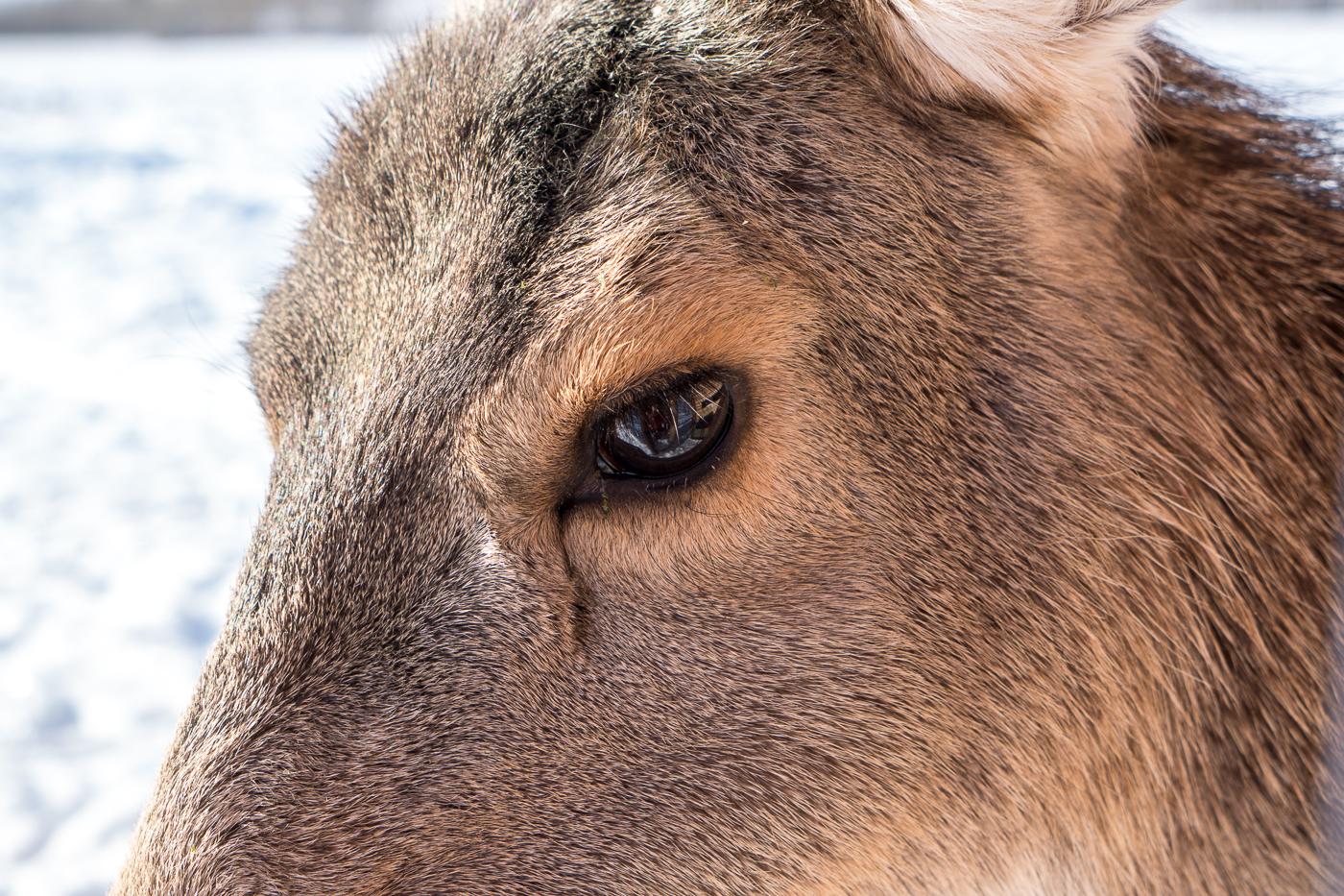 Oeil - Yukon Nature Preserve - À faire près de Whitehorse