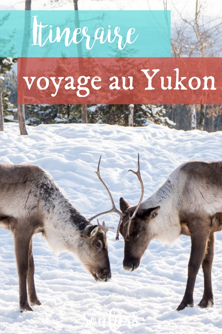 Quoi faire en voyage au Yukon, à Whitehorse et dans les environs en hiver