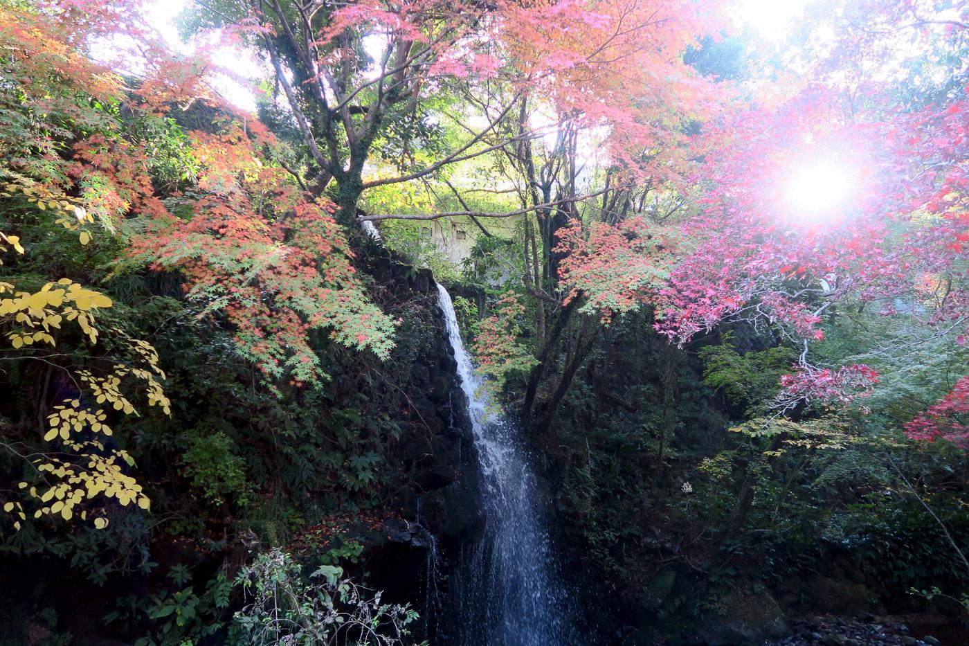 Feuilles d'automne devant une chute au Japon