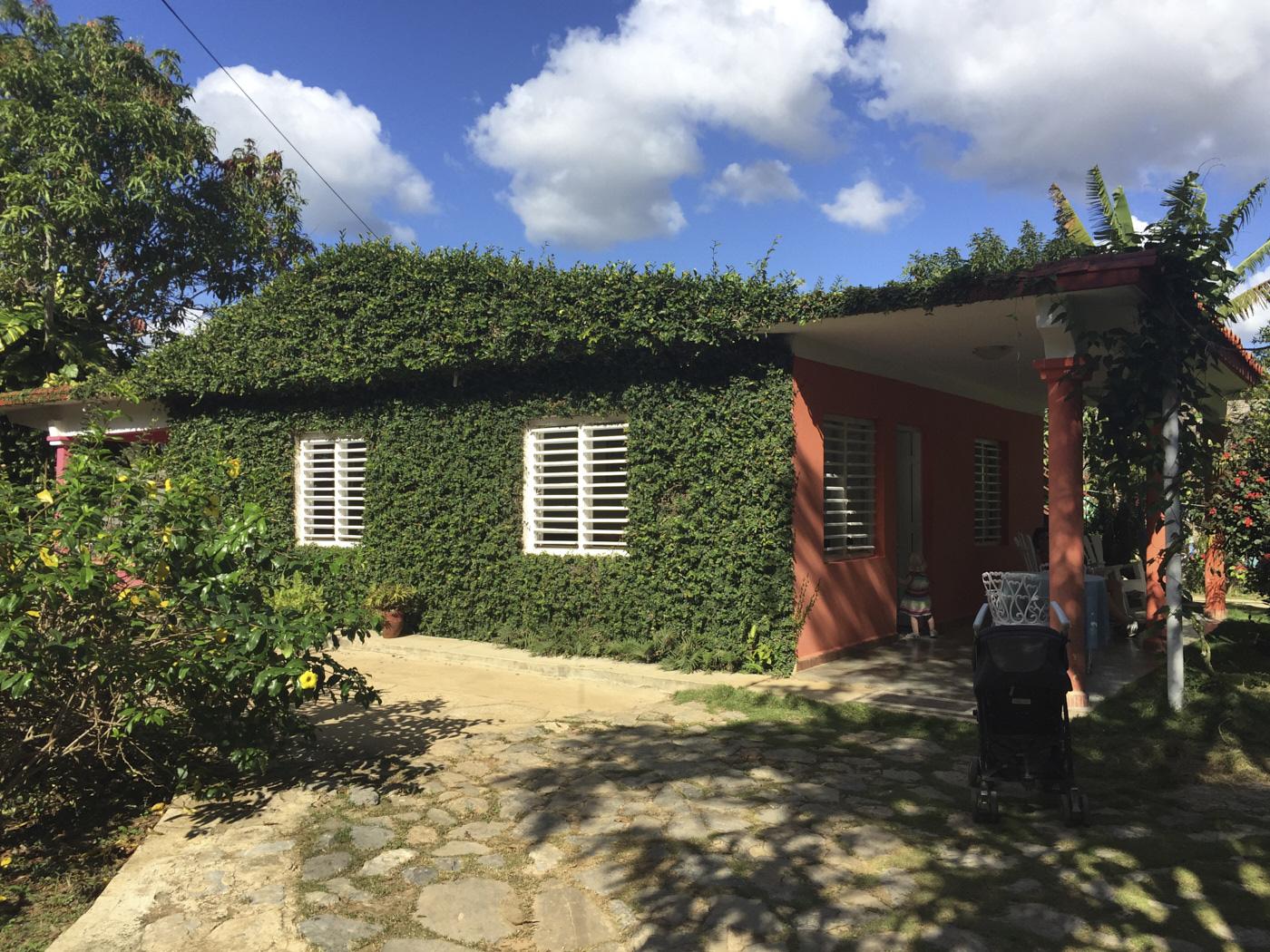 Maison cubaine recouverte de vignes