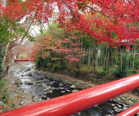 Voyage pour les momiji au Japon en automne - Pont rouge et couleurs
