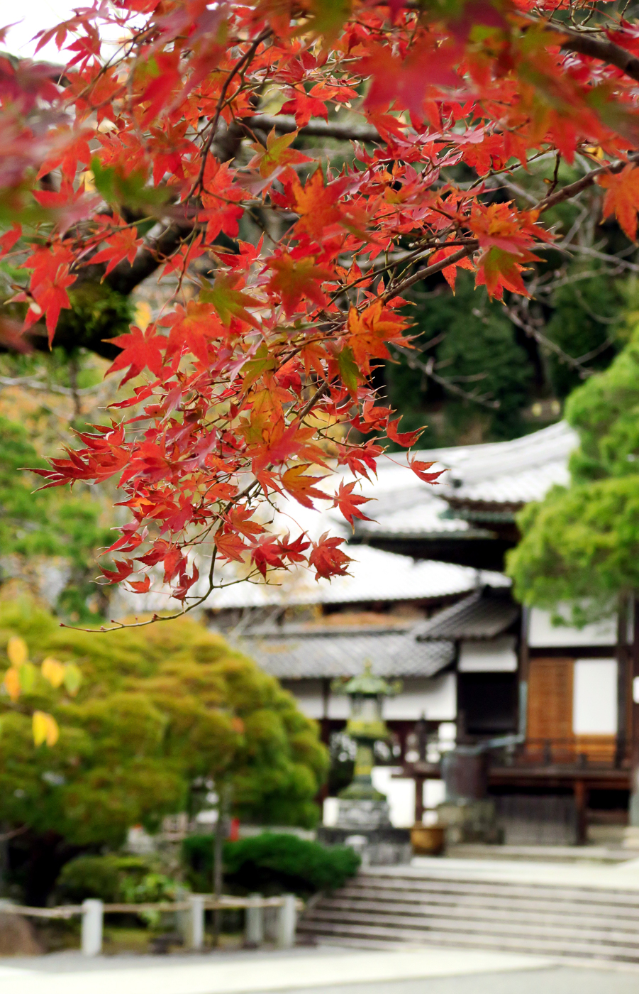 Temple en voyage des moiji au Japon en automne