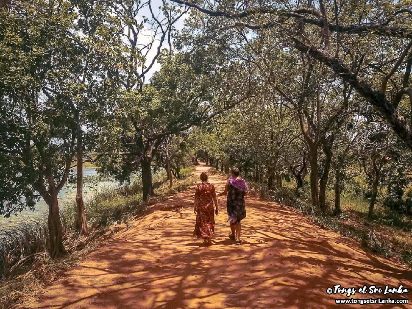 Sri Lanka où partir en 2020 - Tongs et Sri Lanka