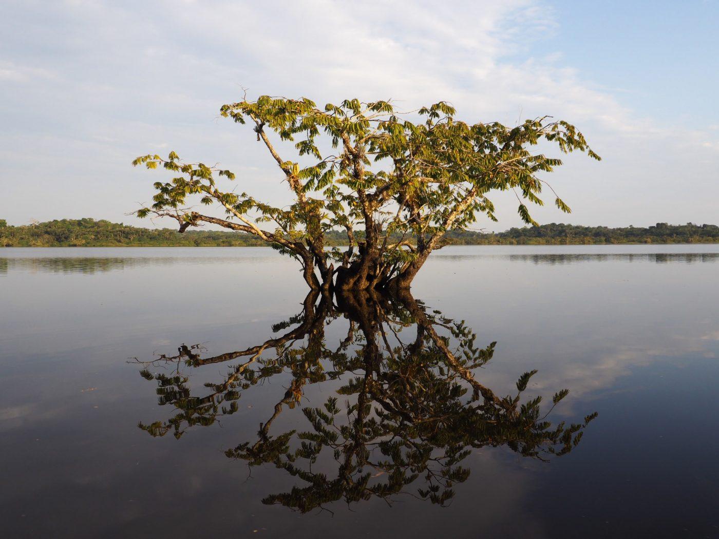 arbre dans l'eau en Amazonie d'Équateur - Caroline Herbin
