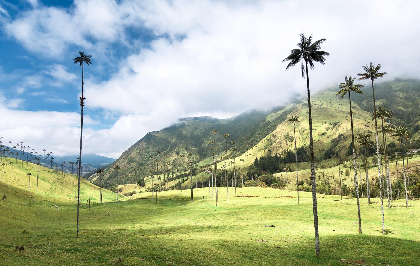 arbres géants de Colombie par Caroline Krauze