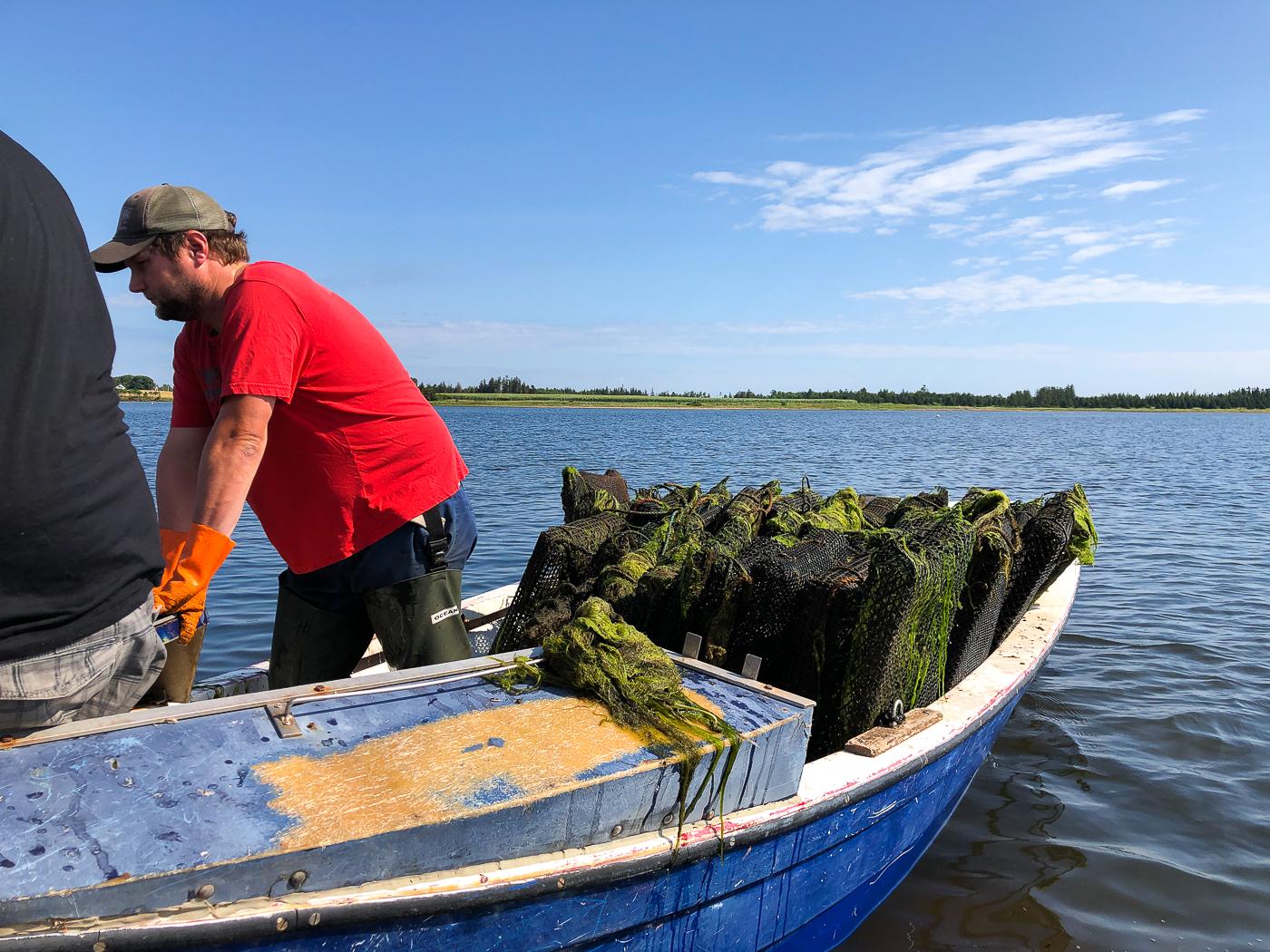 Pêcheurs en bateau pour la récolte d'huîtres