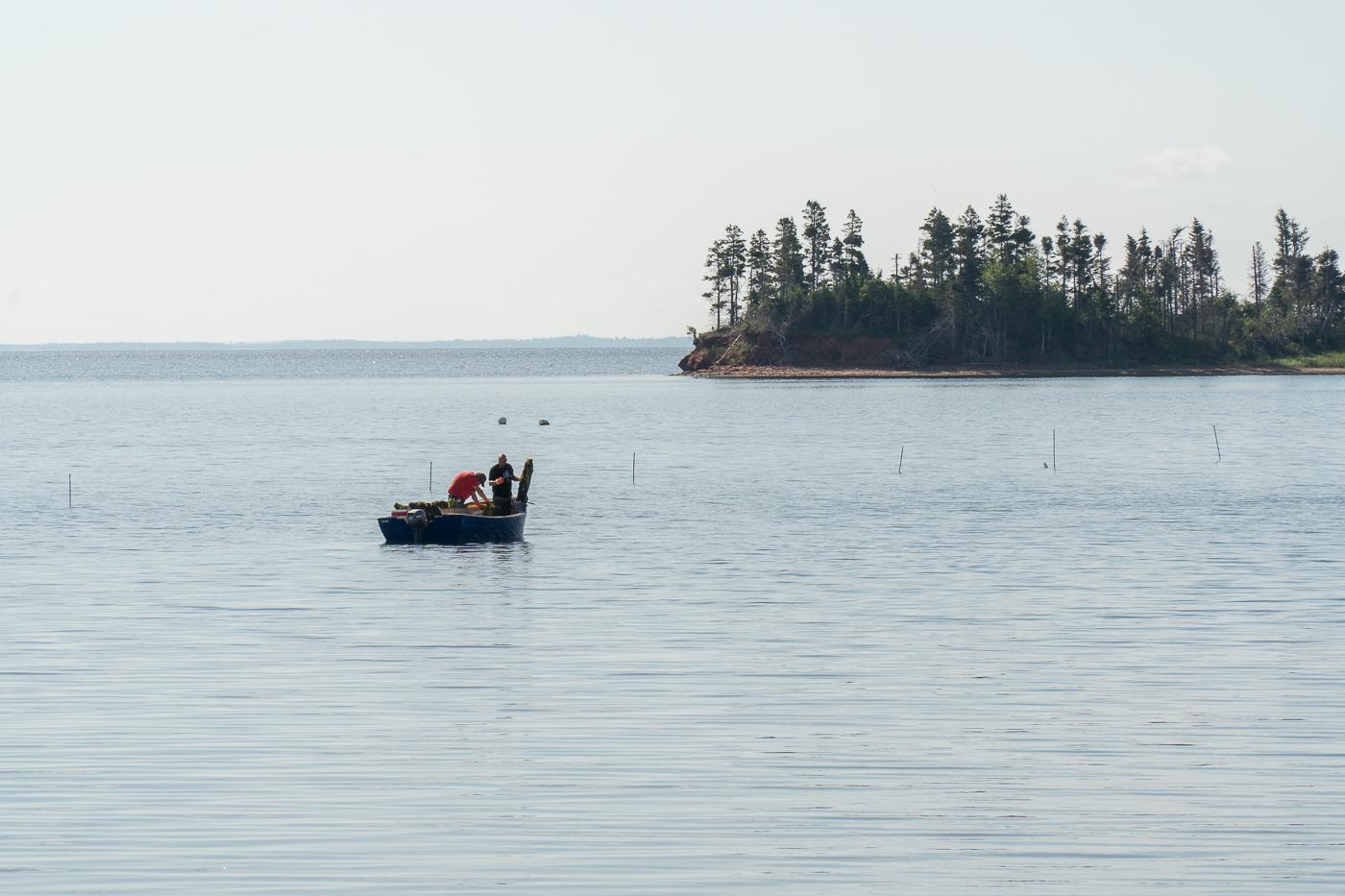 Pêcheurs mariculteurs sur L'eau - Sortie à faire à l'Île-du-Prince-Édouard