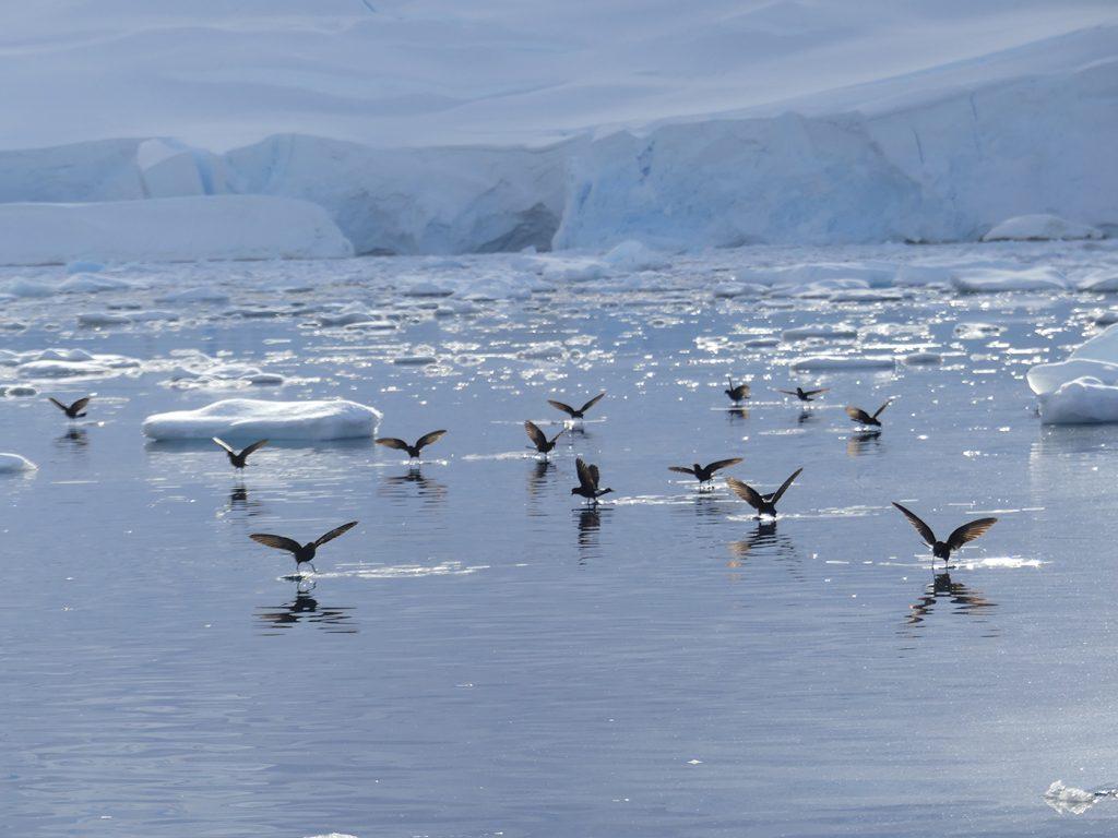 Des oiseaux sur l'eau en voyage en Antarctique