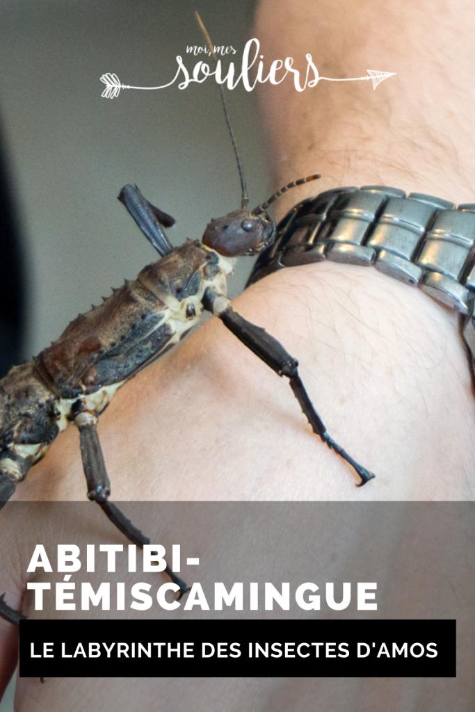 Le labyrinthe des insectes d'Amos en Abitibi-Témiscamingue