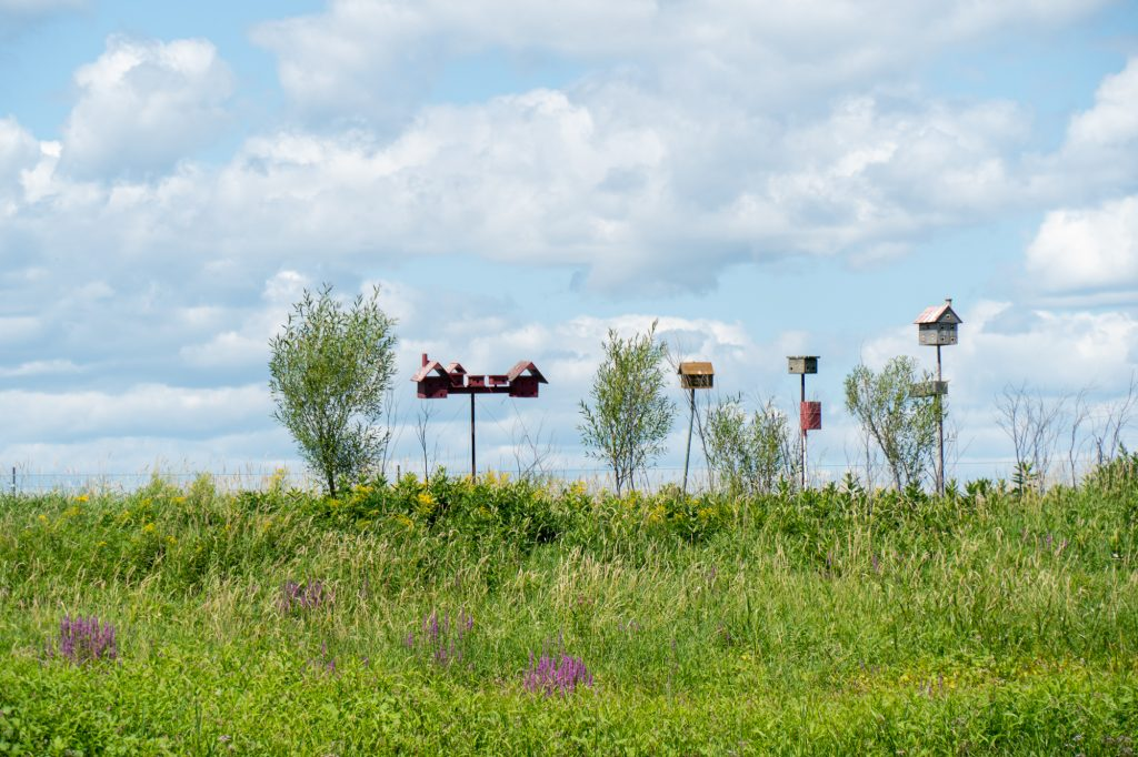 cabanes à oiseaux dans le marais sur la rive
